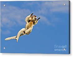 Who Needs Wings? Acrylic Print by Ashley Vincent