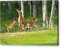 Who Rang The Dinner Bell? Acrylic Print