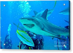 Who Said Sharks Were Mean Acrylic Print by John Malone