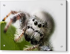Who You Looking At  Acrylic Print by Craig Lapsley