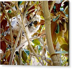 Acrylic Print featuring the photograph Whooo Are You? by Meghan at FireBonnet Art