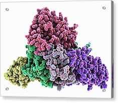 Whooping Cough Toxin Molecule Acrylic Print by Laguna Design