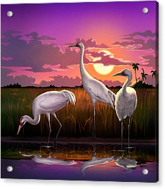 Whooping Cranes At Sunset Tropical Landscape - Square Format Acrylic Print