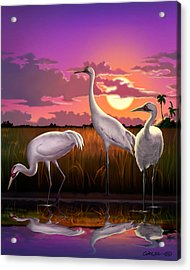 Whooping Cranes Tropical Florida Everglades Sunset Birds Landscape Scene Purple Pink Print Acrylic Print by Walt Curlee