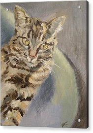 Who's Looking At'cha Acrylic Print by Veronica Coulston