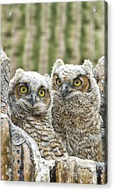 Who's There? Acrylic Print by Bryan Keil