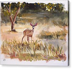Who's There Acrylic Print by Jennifer Beaudet