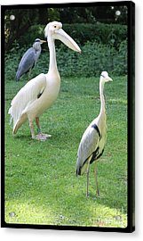 Why Am I So Different... Acrylic Print
