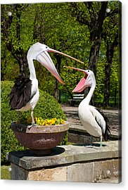 Why Are You Yelling On Me Acrylic Print by Iryna Soltyska