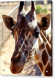 Why Hello There Acrylic Print by Dick Botkin