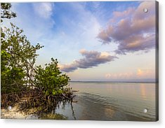 Why Speak Acrylic Print by Marvin Spates