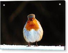 Why The Long Face Robin. Acrylic Print