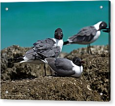 Acrylic Print featuring the photograph Why You Looking? by Robert L Jackson
