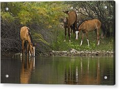 Wild Along The River Acrylic Print