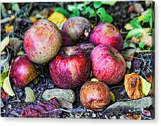 Wild Apples Acrylic Print by Lee Dos Santos