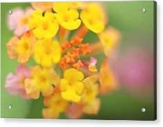 Acrylic Print featuring the photograph Wild Beauty by Afrison Ma