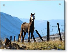 Wild Beauty Acrylic Print by Lynn Hopwood
