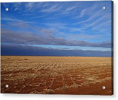 Acrylic Print featuring the photograph Wild Blue by Tom DiFrancesca