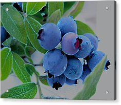 Wild  Blueberries Acrylic Print by Shirley Sirois