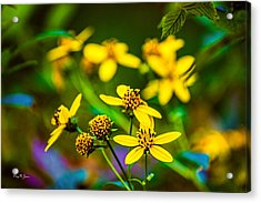Flowers - Wild Bouquet  Acrylic Print by Barry Jones