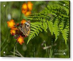 Wild Buckeye Camouflage Acrylic Print