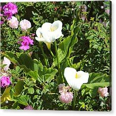 Wild Calla Lillies Acrylic Print