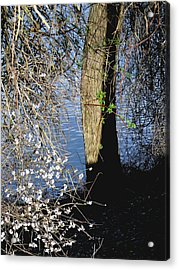 Wild Cherry Tree On The Sacramento River  Acrylic Print by Pamela Patch