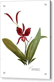 Wild Chinese Orchid #2 Acrylic Print by Alethea McKee