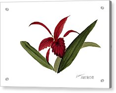 Wild Chinese Orchid #3 Acrylic Print by Alethea McKee
