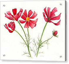 Acrylic Print featuring the painting Wild Cosmos by Nan Wright