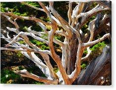 Wild Cypress Acrylic Print