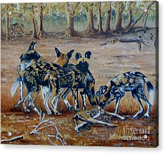 Wild Dogs After The Chase Acrylic Print by Caroline Street