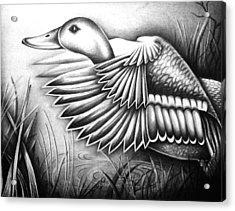 Wild Duck Acrylic Print