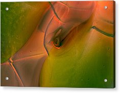 Acrylic Print featuring the photograph Wild Eyes by Omaste Witkowski