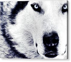 Wild Eyes Acrylic Print by VRL Art