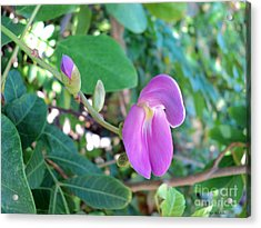 Acrylic Print featuring the photograph Wild Flower By Megan Dirsa-dubois by Megan Dirsa-DuBois