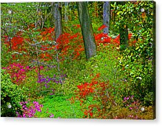 Wild Flower Garden Acrylic Print by Andy Lawless