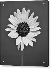 Acrylic Print featuring the photograph Wild Flower by Kjirsten Collier
