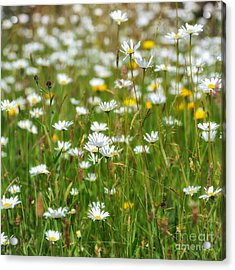 Wild Flower Meadow Acrylic Print by Janet Burdon