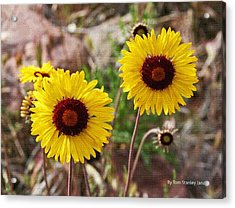 Wild Flowers Above The Rim Acrylic Print by Tom Janca