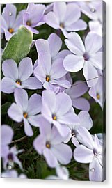 Wild Flowers Acrylic Print by Bob Noble Photography