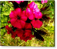 Acrylic Print featuring the photograph Wild Flowers by Eric Switzer