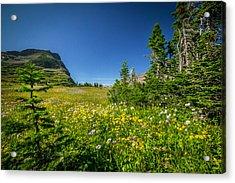 Wild Flowers Glacier National Paintedpark   Acrylic Print by Rich Franco