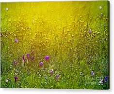 Wild Flowers In Morning Light Acrylic Print by Odon Czintos