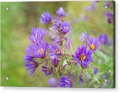 Wild Flowers In The Fall Acrylic Print
