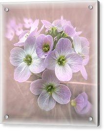 Wild Flowers Acrylic Print by Fiona Messenger