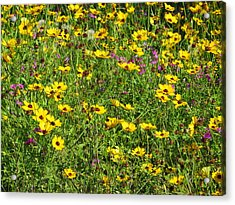 Wild Flowers Acrylic Print by Tim Townsend