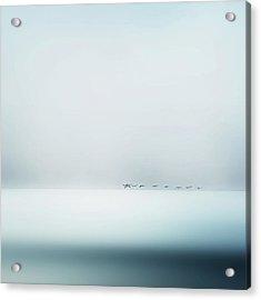 Wild Geese Acrylic Print