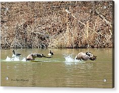 Acrylic Print featuring the digital art Wild Goose Chase by Lorna Rogers Photography