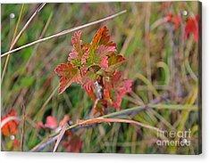 Wild Gooseberry Leaves Acrylic Print